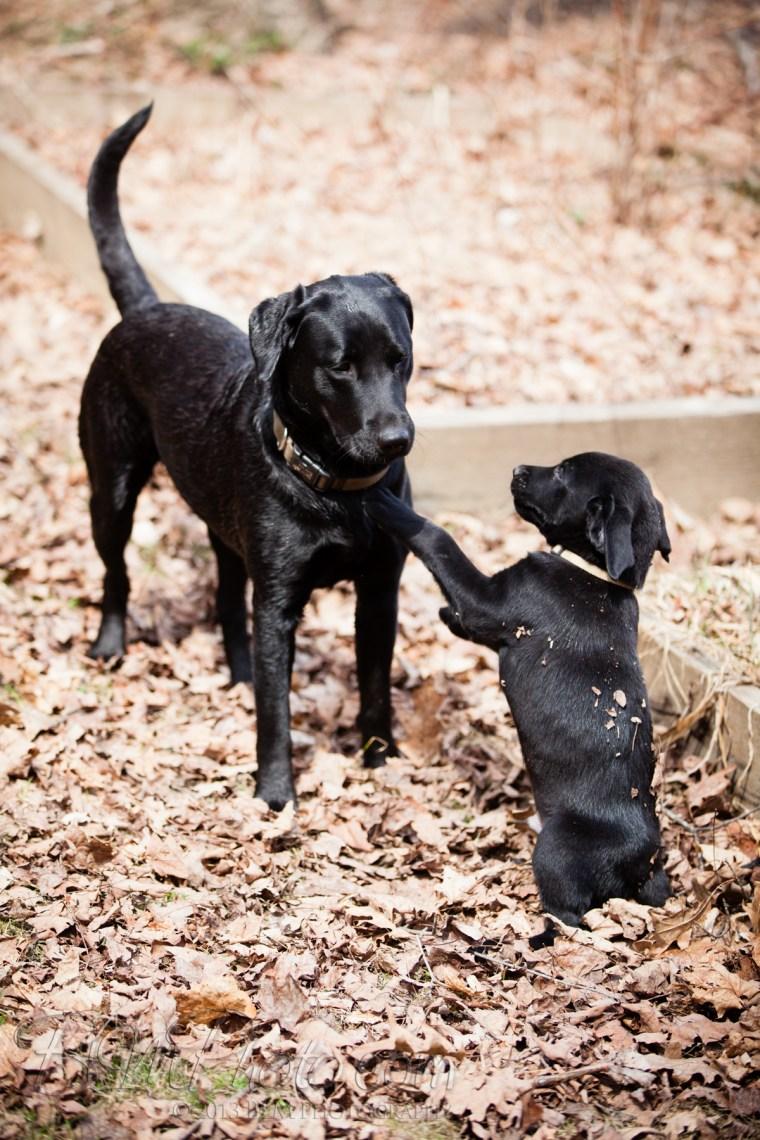 Webber-Dogs-5834