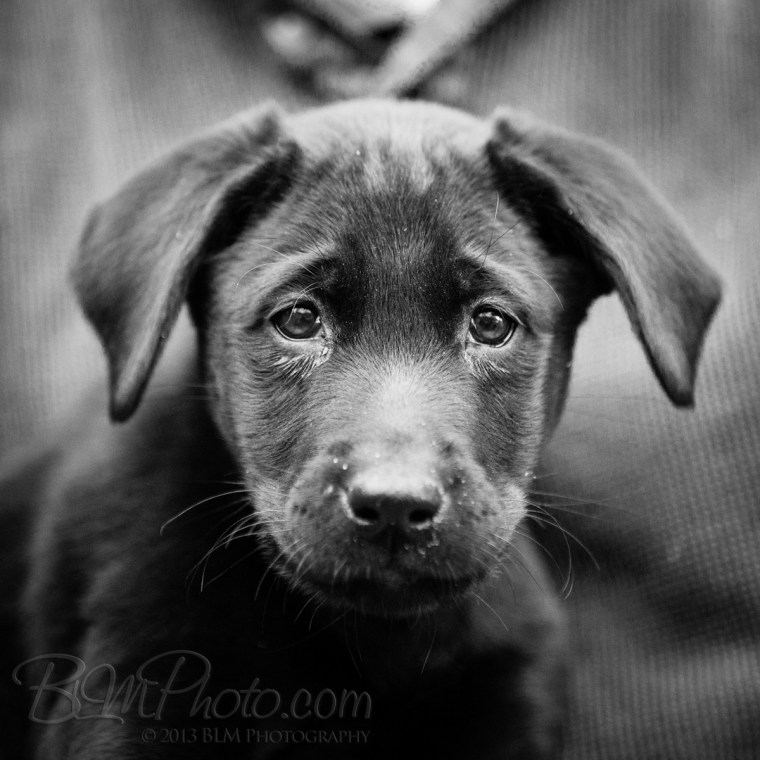 Webber-Dogs-5968-2