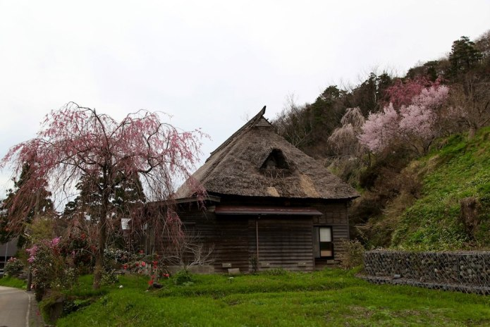 Weeping Cherry & House