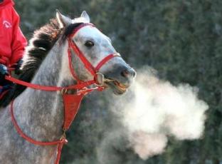【競馬】 キャプテントゥーレ種牡馬引退