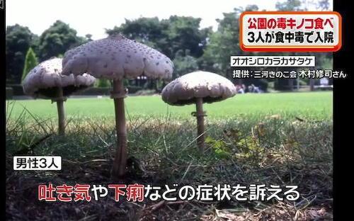 公園のデイキャンプ場でBBQをしていた30代の男性3人、近くに生えていた毒キノコを焼いて食べて救急搬送される - 名古屋・荒子川公園