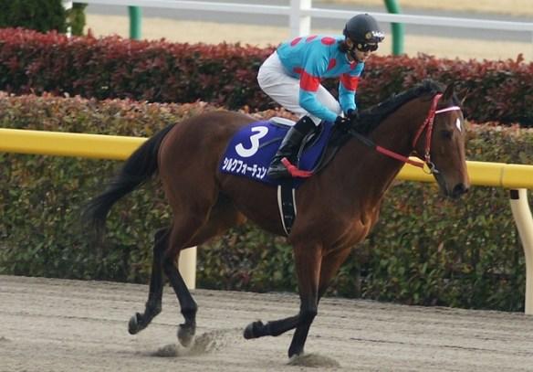 【競馬】 シルクフォーチュンが引退、乗馬へ
