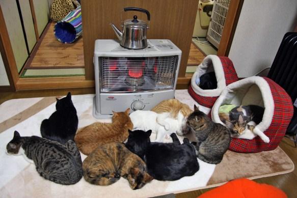 猫がストーブの前を占拠して座れないんだが【画像あり】