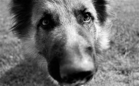 飼い犬に逃げられたという子に会った。その後かなり大型犬を家の近所で発見!