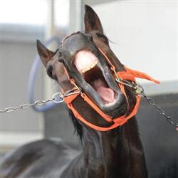 カレンブラックヒルがフェブラリーステークスに意欲