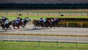 【競馬】 ダート適性を見抜くのが遅かった馬といえば?