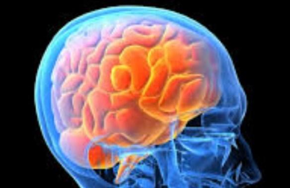 脳にいろんな汁垂らすとすごいらしい