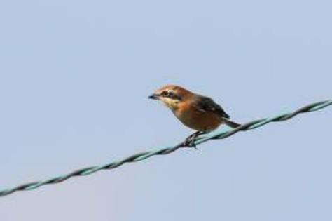 なぜ電線に止まった鳥は感電して焼鳥にならないのか