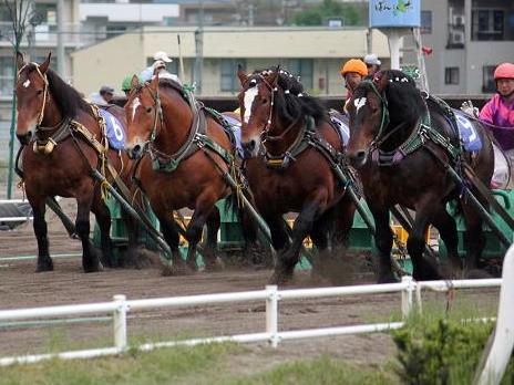 【朗報】 ばんえい競馬 9900万円の黒字