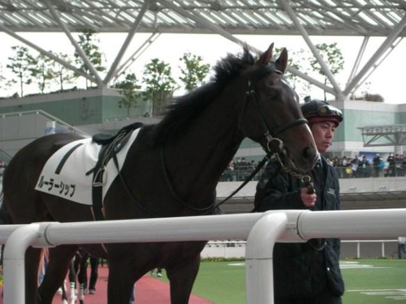 【競馬】 『ルーラーシップは確実に種牡馬成功する』 という謎の風潮
