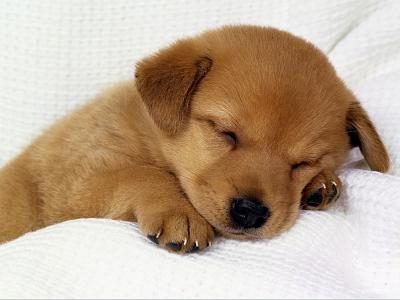 睡眠時間8時間ぐらい必要な奴wwwwwwwwwwwwww