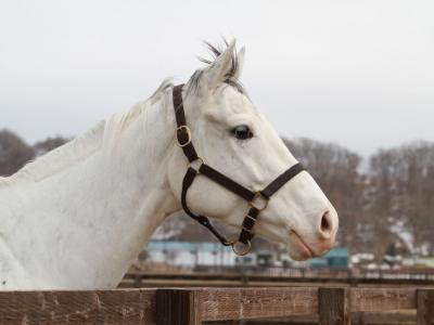 【マジキチ】来春、馬と性行為しに北海道行こうと思うwwwwwwww