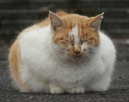 【マジキチ】何で猫って殺しちゃいけないの?