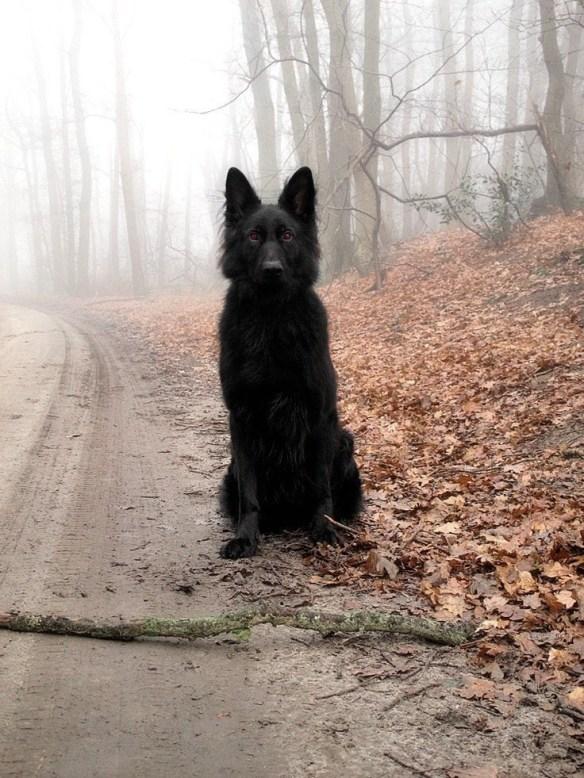 【画像あり】助けて!山道でヤバそうな犬とエンカウントしたんだが・・・ すげえこっち見てる・・・