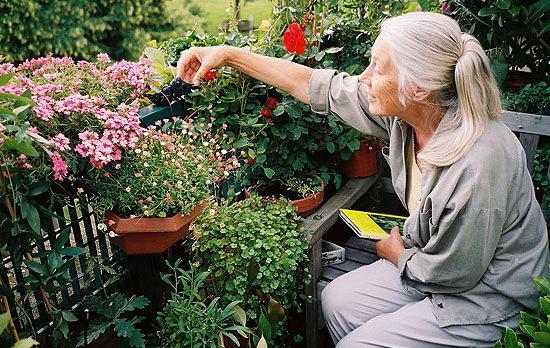 花壇スペースが荒らされてるのでびっくりして中にはいると母が泣きそうな顔でしょぼくれてた