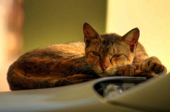 交番付近で「にゃー」 野良猫の幸せ願う(*ΦωΦ)