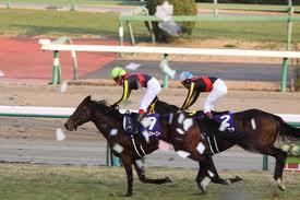 【競馬】 「勝ち行ったから負けてもしょうがない」 とかいう謎理論