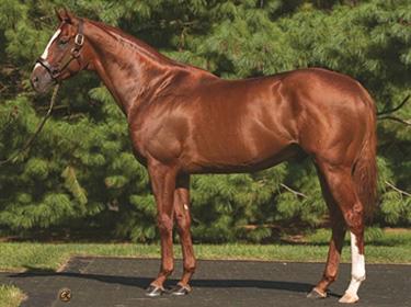 【競馬】日本軽種馬協会、種牡馬サマーバードを導入へ…ベルモントSなど米G1を3勝
