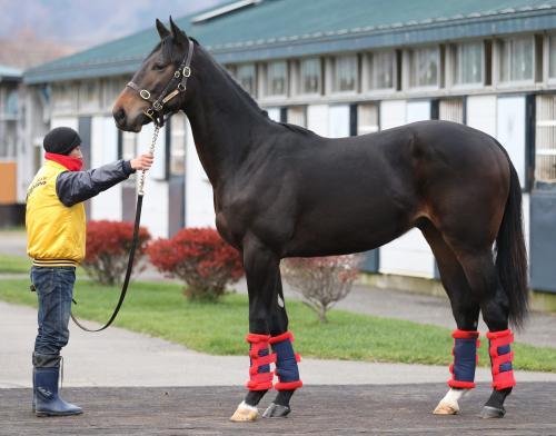 【競馬】 ウオッカの初子、1歳にしてすでに大物540キロ(画像あり)