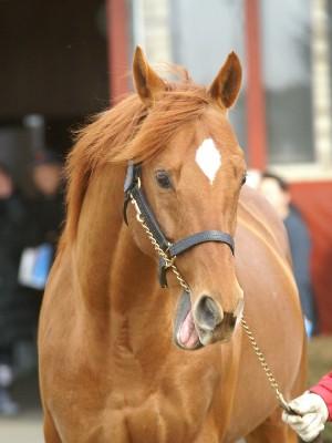 【競馬】 アサクサデンエン(牡13)が種牡馬引退