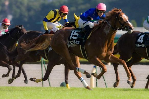 【競馬】 アニメイトバイオ(牝5)が引退、繁殖入り…一昨年のローズS優勝、GI2着2回