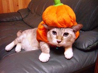 【ネット調査】 ハロウィン流行らない理由…「何祝うか謎」「下手すると通報されるから」★3