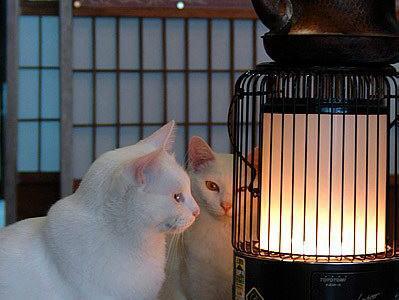 冬の暖房器具と言えば? やっぱりアレ