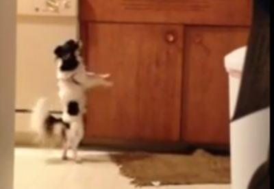 【動画】 「うちの犬を隠し撮りしたら、2本足で立って踊り続けてた」(´・ω・`)