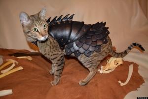 【可愛すぎ】 猫の身を守るためのアーマーが、ア○ルーにしか見えない件wwwwwww(画像あり)