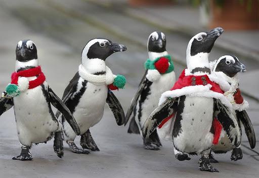 【小咄】ある男がペンギンを拾った