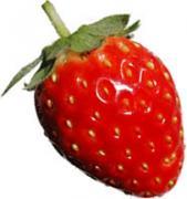 イチゴが高騰…1パック2千円、例年の倍で洋菓子店を直撃
