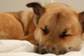 睡眠を取らなきゃ生きていけない地球上の生物って欠陥品じゃね・・・・?