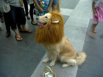 犬ライオン