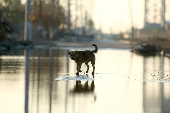 【胸糞注意】娘が犬に噛まれて重症で危険状態の時にその犬の飼い主が言った言葉