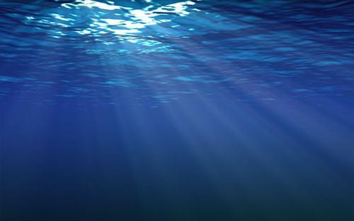 海にいる危険生物で打線組んだwwwwww