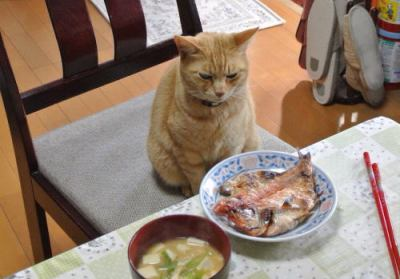 """外国人「朝っぱらから魚!?」 実は納豆よりも""""朝から魚""""に驚かれる和食、慣れてしまえば病みつきに … 「お腹一杯食べても胃もたれしないので、元気よく動ける」との声も"""