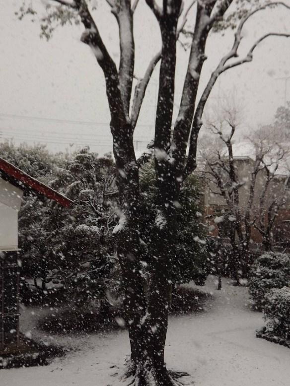 【画像】東京マジで大雪ワロタwwwwwwwwww