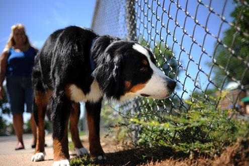 【シモ注意】 犬フン放置BBAがいたんだがその瞬間をなかなか捕まえられなかった
