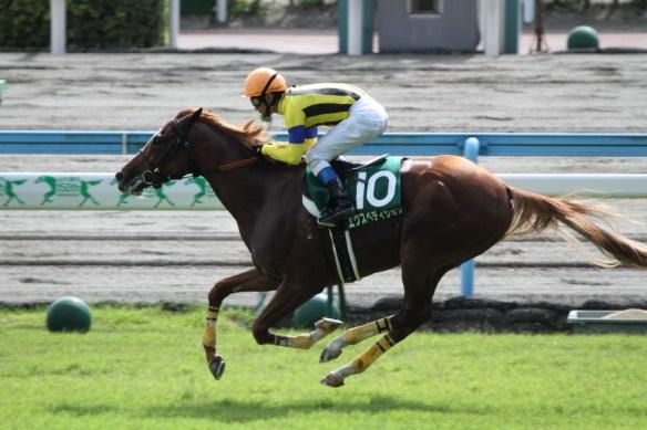 【競馬】 エクスペディションが競走馬登録抹消 乗馬に
