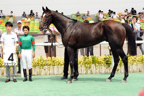 【競馬】 巨漢馬ショーグン、JRA史上2位の馬体重604キロで勝利(画像あり)