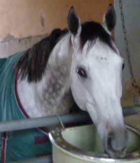 【競馬】 今年のオルフェの帯同馬ブラーニーストーン