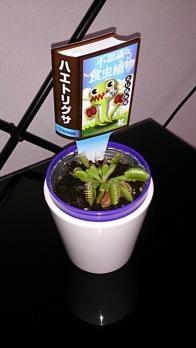 【画像あり】食虫植物買っちったwwwwww