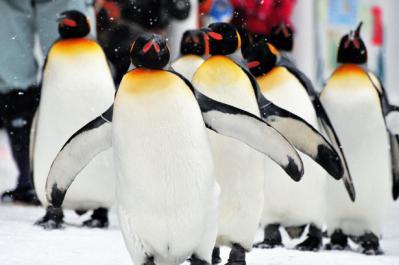 【驚愕】ペンギンが鳥類だってよwwwwwwwww