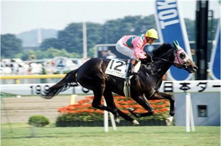 一番だと思う『人馬一体』の騎手と競走馬のコンビ