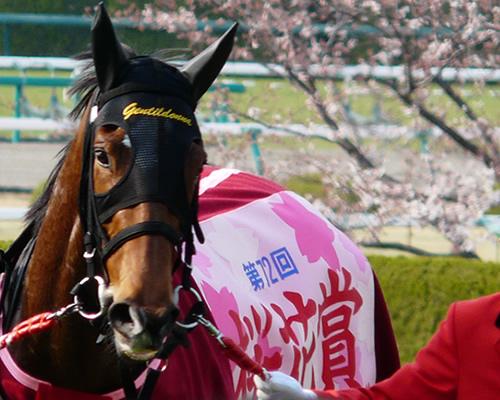 【朗報】ジェンティルドンナ、現役最強馬確定