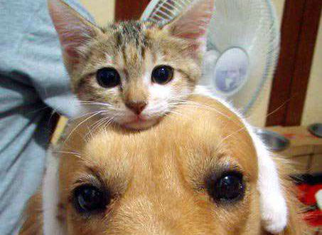 見知らぬネコ、家宅侵入しすっかりくつろぐ … というツイートがTwitter上で話題