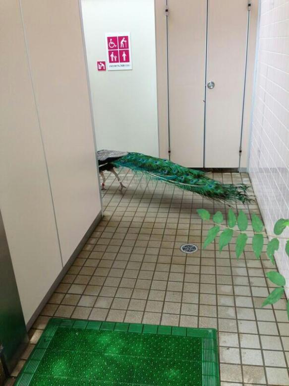 【画像】トイレにヤバイ奴がいるんだが・・・