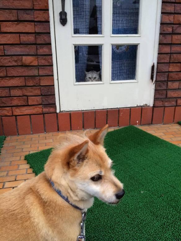 【画像あり】天敵と会った時のうちの犬の表情ワロタwwwwwwwwwww