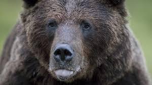 【恐怖】三毛別羆事件のせいで日本人のクマに対する知識が歪み過ぎててワロタwwwwwwww