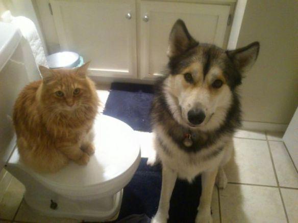 【画像49枚】きゃわわ! 仲良しな猫ちゃんとワンちゃんの画像集